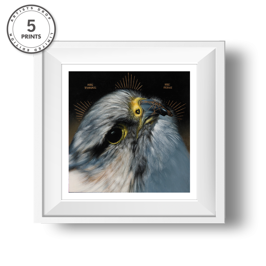 Hawk-Transparent
